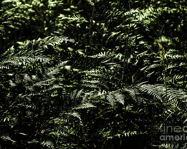 Green Poster featuring the photograph Textures Of A Rainforest by Jorgo Photography - Wall Art Gallery