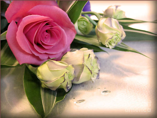 Flowers Poster featuring the photograph Thank You Rose Bouquet by Eena Bo
