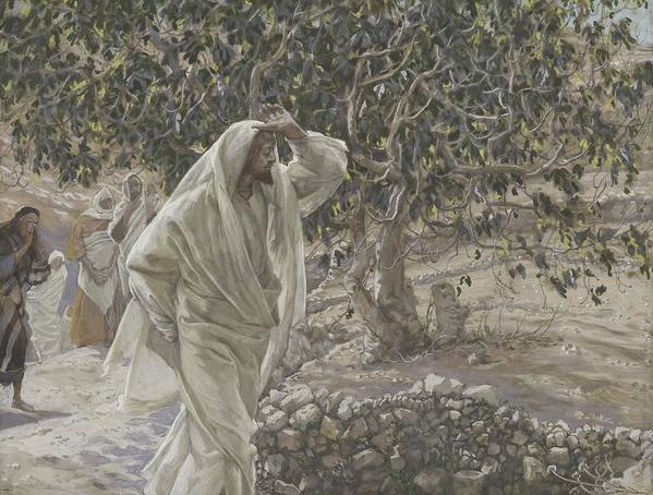 Tissot Poster featuring the painting The Accursed Fig Tree by Tissot