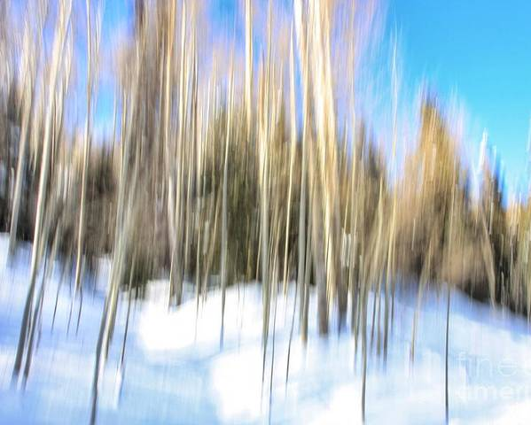 Aspen Trees Poster featuring the photograph The Back Woods by Carrie Cathleen Photography