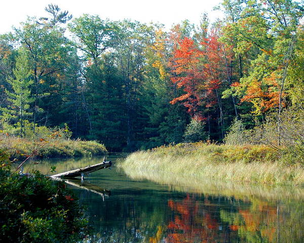 Landscape Poster featuring the photograph The Beginning Of Fall by Jennifer Englehardt