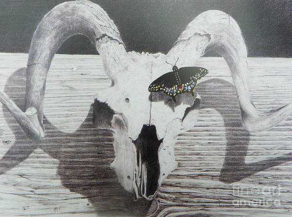 Landscape Poster featuring the drawing The Butterfly And The Skull by David Ackerson