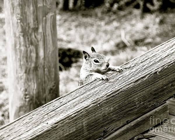 Squirrel Poster featuring the photograph The Curious Squirrel by Lori Leigh