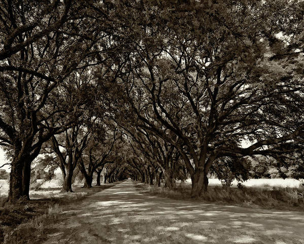 Evergreen Plantation Poster featuring the photograph The Deep South Bw by Steve Harrington