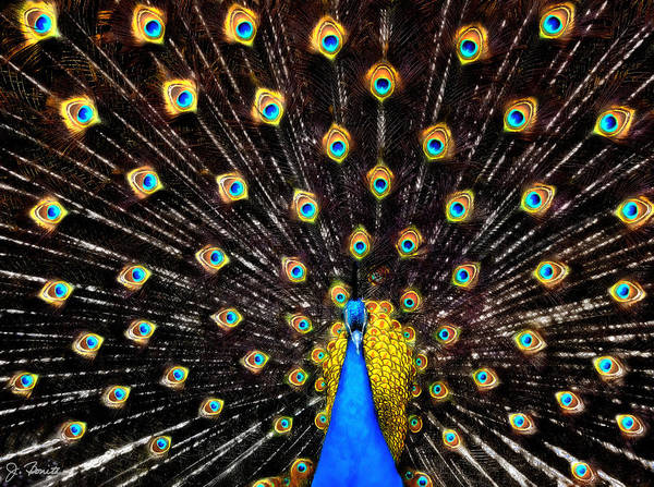 Peacock Poster featuring the digital art The Eyes Have It by Joe Bonita