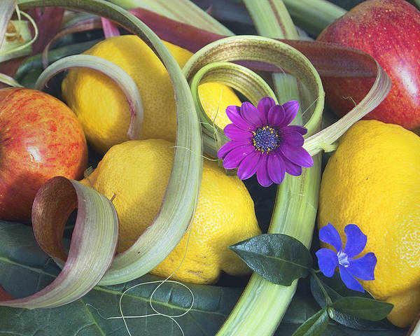 Still Life Poster featuring the photograph The Fruits Of Summer by Robert Lacy