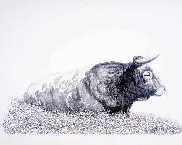 Longhorn Poster featuring the drawing The Herdmaster by Howard Dubois