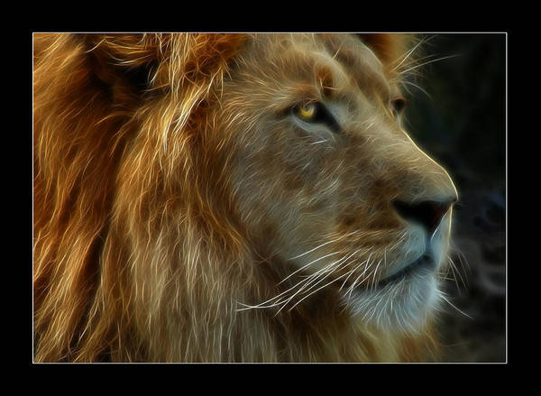 Lion Poster featuring the photograph The King by Ricky Barnard