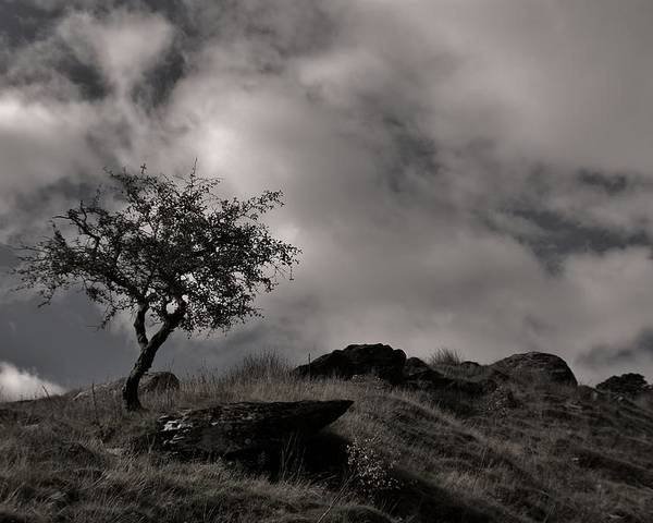Snowdonia Poster featuring the photograph The Last Tree by Sean Wareing
