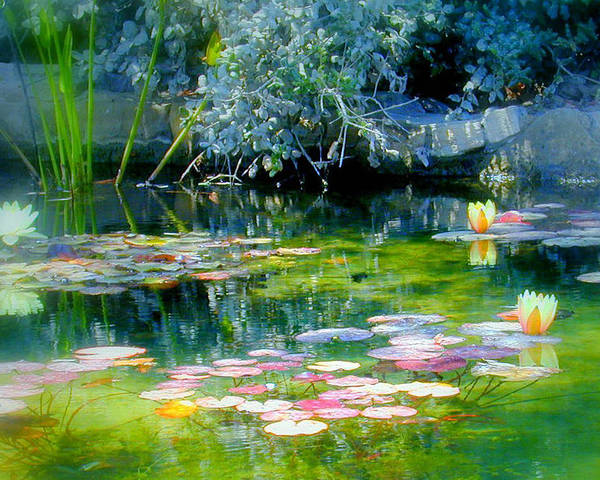 Lily Pond Poster featuring the photograph The Lily Pond I by Lynn Andrews