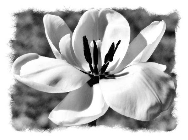Black And White Poster featuring the photograph The Notecard by Karen Scovill