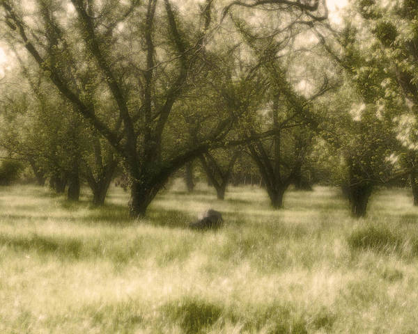 Landscape Poster featuring the photograph The Orchard by Ayesha Lakes