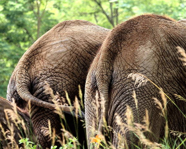 African Elephant Poster featuring the photograph The Other Side by Angela Rath