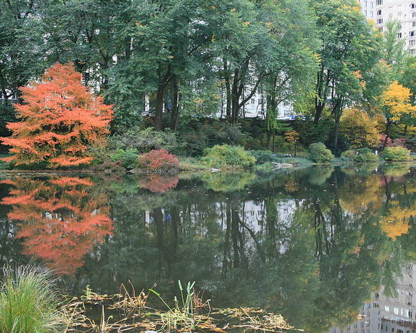 Central Park Poster featuring the photograph The Pond In Central Park In Fall by Christopher Kirby