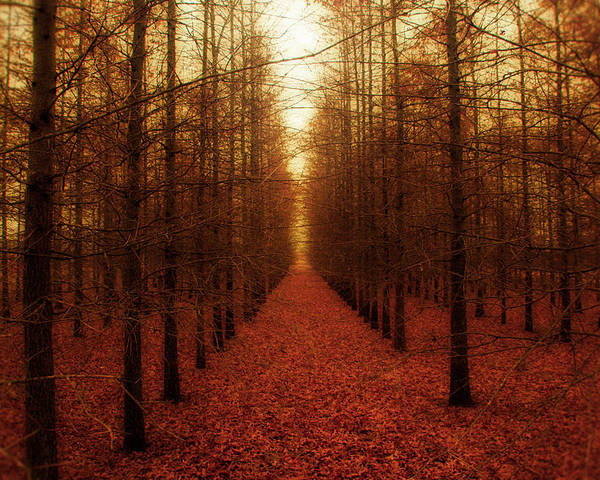Forest Poster featuring the photograph The Red Forest by Amy Tyler