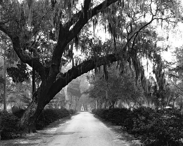 Bonaventure Cemetery Poster featuring the photograph The Road Home by Rick Wilkerson