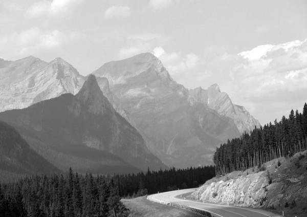 Landscape Poster featuring the photograph The Road Less Travelled by Tiffany Vest