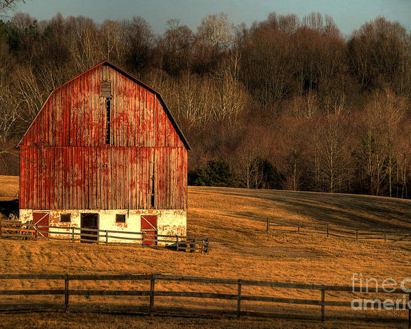 Barn Poster featuring the photograph The Simple Life by Lois Bryan