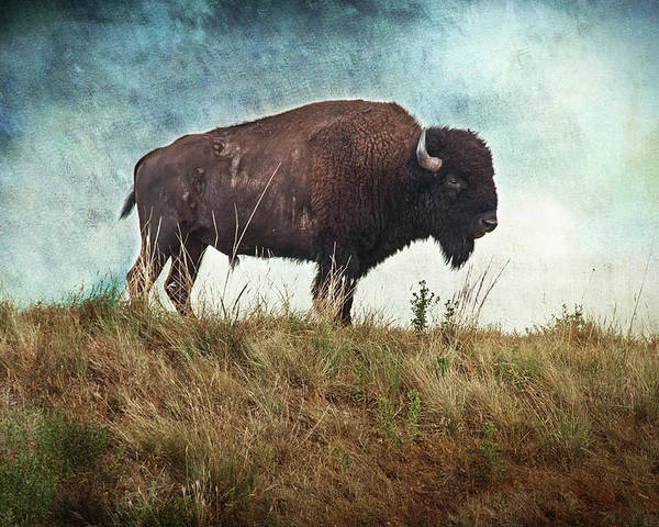 Buffalo Poster featuring the photograph The Stance by Tamyra Ayles