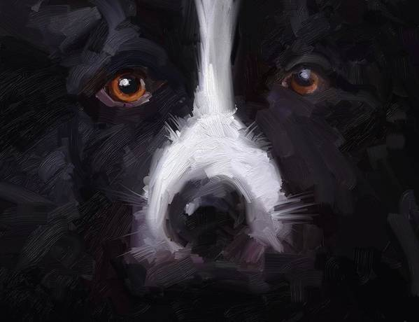 Border Collie Dog Sheepdog Stare Poster featuring the digital art The Stare by Scott Waters