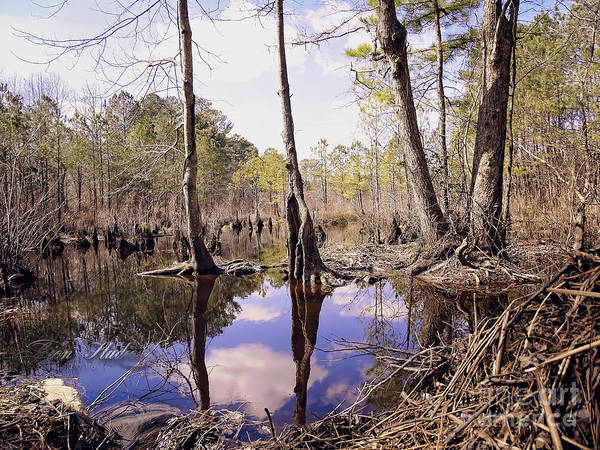 Photoshop Poster featuring the photograph The Swamp by Melissa Messick