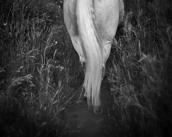 Equine Poster featuring the photograph The Tale End by Nick Sokoloff