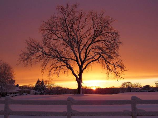 Landscape Poster featuring the photograph The Tree At Sunset by Kristen Anderson