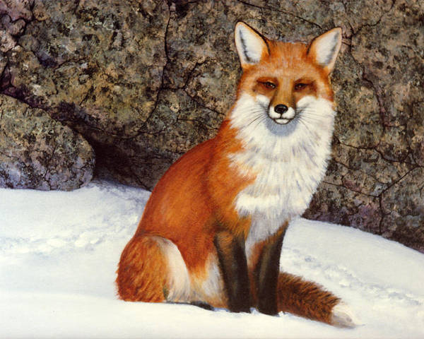 Wildlife Poster featuring the painting The Wait Red Fox by Frank Wilson