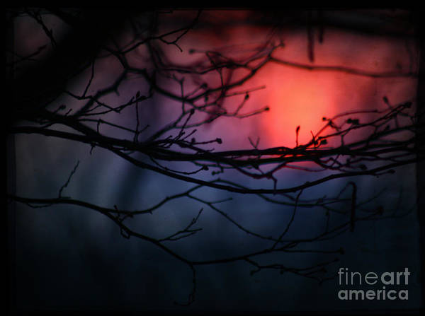 Sunset Poster featuring the photograph The Warm Light by Angel Ciesniarska