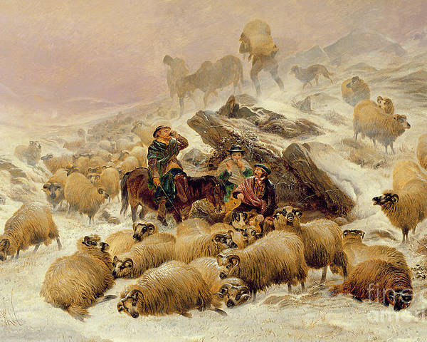 Sheep Poster featuring the painting The Warmth Of A Wee Dram by TS Cooper