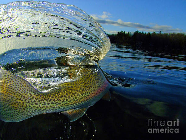 Trout Poster featuring the photograph The Way Of The Trout by Brian Pelkey