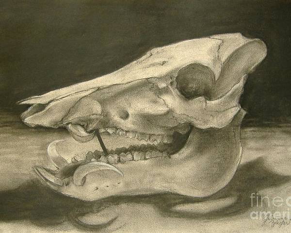 Pig Skull Poster featuring the drawing This Little Piggy by Julianna Ziegler