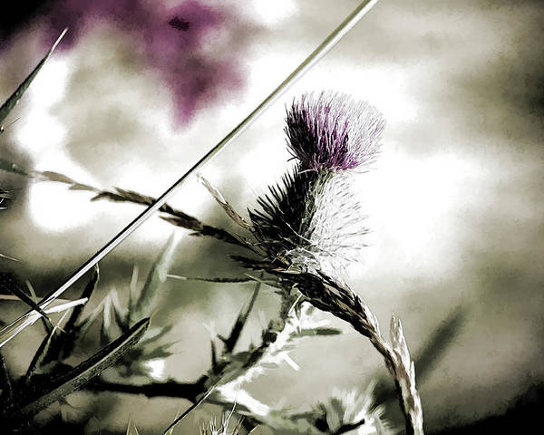 Thistle Poster featuring the photograph Thistle by Bonnie Bruno