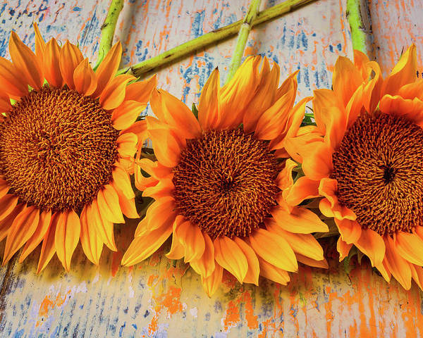 Mood Poster featuring the photograph Three Graphic Sunflowers by Garry Gay