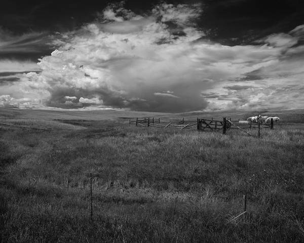 Black And White Poster featuring the photograph Three White Horse And Corral Bw by Rick Strobaugh