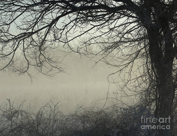 Misty Morning Poster featuring the photograph Through The Mist by Elizabeth Winter