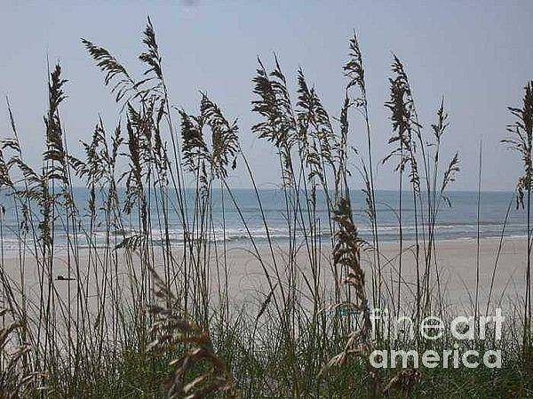 Florida Beach Near St. Augustine Poster featuring the photograph Thru The Sea Oats by Barb Montanye Meseroll