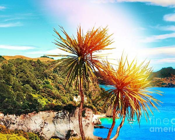 Cabbage Tree Poster featuring the photograph Ti Kouka by HELGE Art Gallery