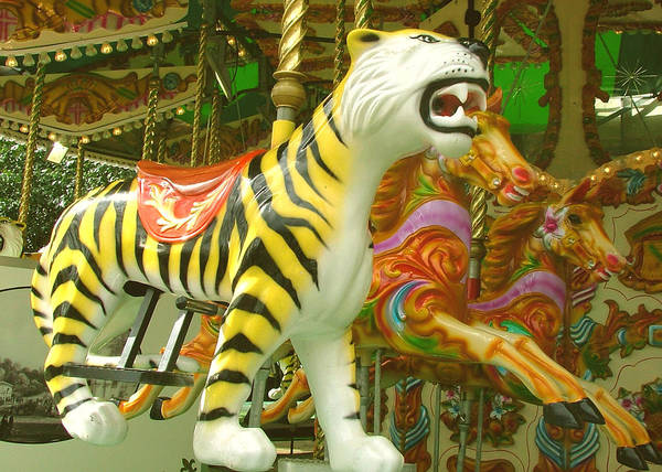 Tiger Poster featuring the photograph Tiger Carousel by Heather Lennox