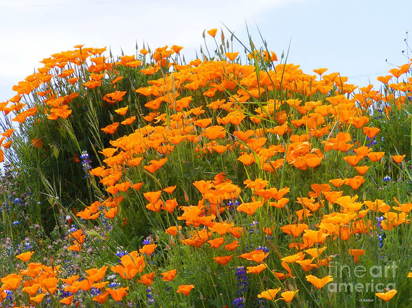 Poppy Poster featuring the photograph Tip Of Poppy Hill by Gail Salitui