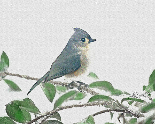 Art Poster featuring the photograph Titmouse by Larry Bishop