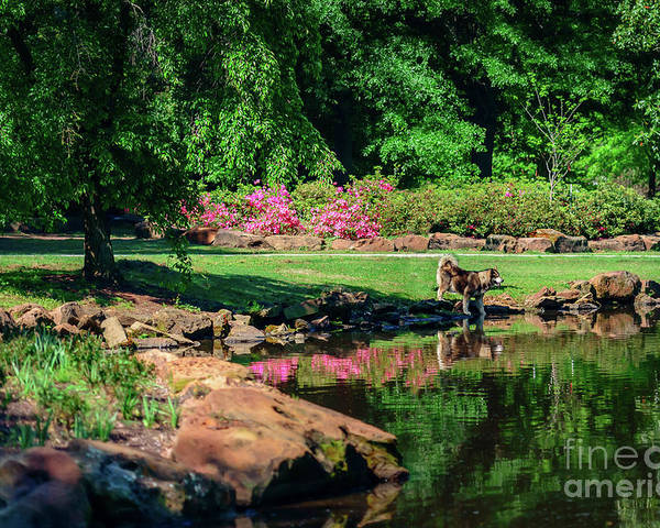 Tamyra Poster featuring the photograph Taking A Break At The Azalea Pond by Tamyra Ayles
