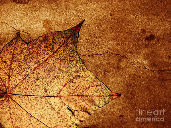 Autumn Poster featuring the photograph Today Everything Changes by Dana DiPasquale