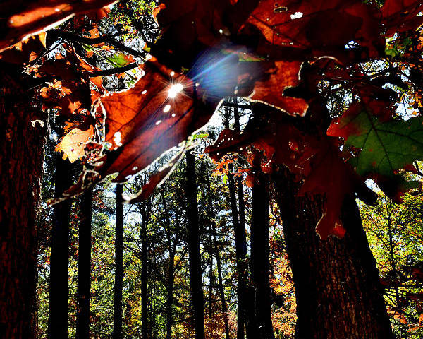 Leaves Poster featuring the photograph Todays Art 202 by Lawrence Hess