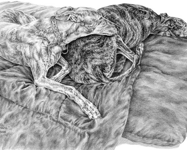 Greyhound Poster featuring the drawing Togetherness - Greyhound Dog Art Print by Kelli Swan