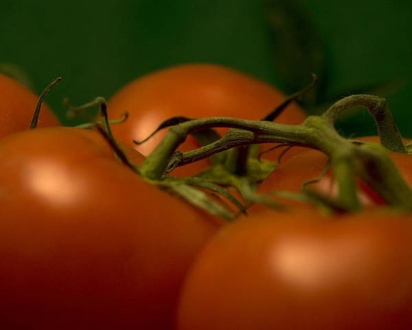 Tomatoes Poster featuring the photograph Tomatoes by Jessica Wakefield
