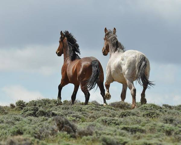 Wild Horses Poster featuring the photograph Too Beautiful by Frank Madia