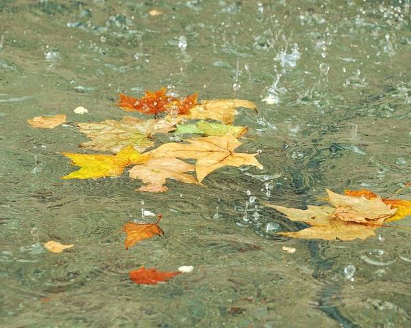 Fallen Poster featuring the photograph Tossed Leaves by JAMART Photography