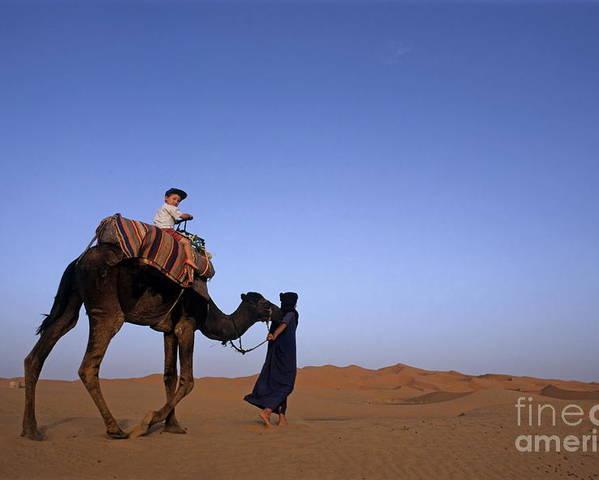 People Poster featuring the photograph Touareg Man Leading Boy Riding Camel In Sahara Desert by Sami Sarkis