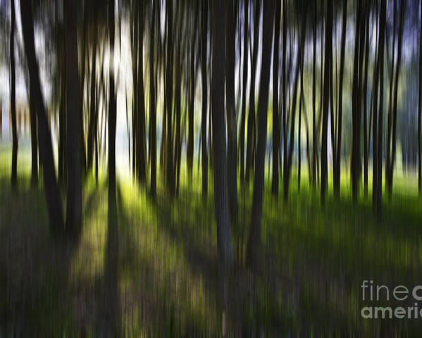 Trees Abstract Tree Lines Forest Wood Poster featuring the photograph Tree Abstract by Sheila Smart Fine Art Photography